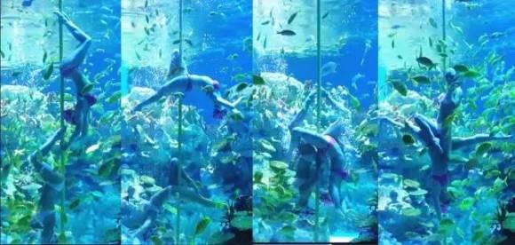 【官方直营】成都海昌极地海洋公园